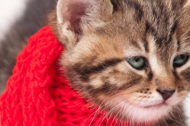 alergia felina