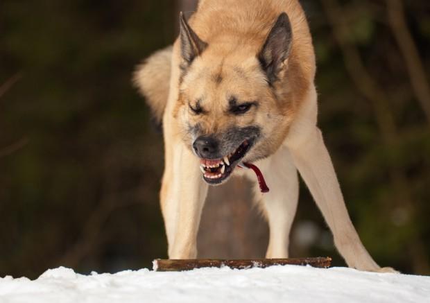 cão possessivo com o galho