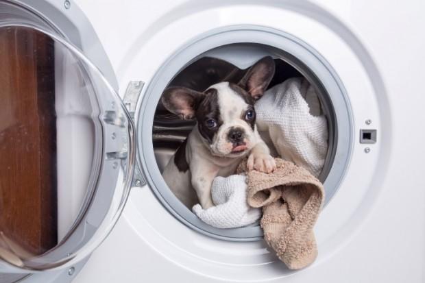 como secar cachorro