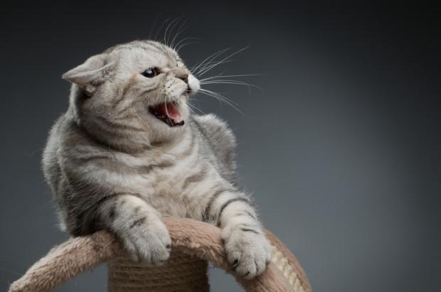 gato com raiva