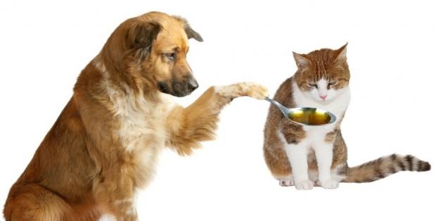 gato sendo medicado