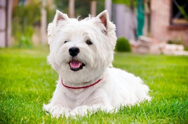 jabari dog