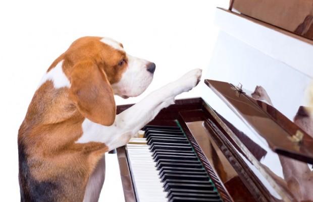 música para cachorro