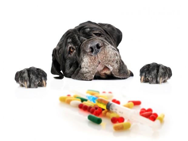 remédio via oral